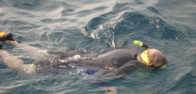 manta ray snorkeling before dark