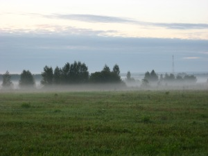 Mist in the cold morning, after the visitation of the boars