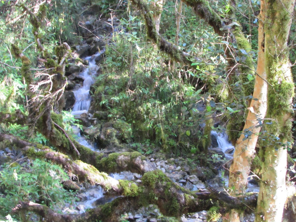 Mountain stream in cloud forest