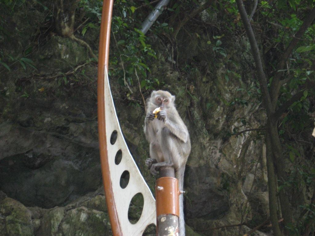 Granpa monkey at Batu Caves