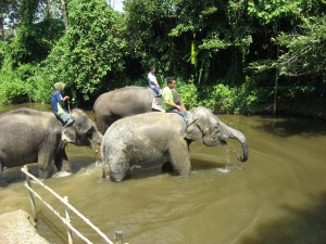 KL elephants bathing