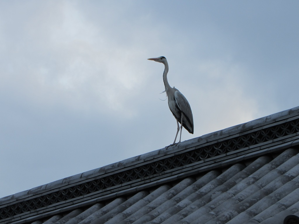 Crane on a temple roof, next to an eagle