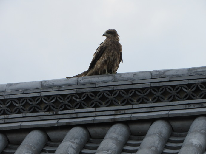 An eagle on temple roof, next to a crane