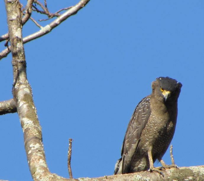 cam-kite-hawk