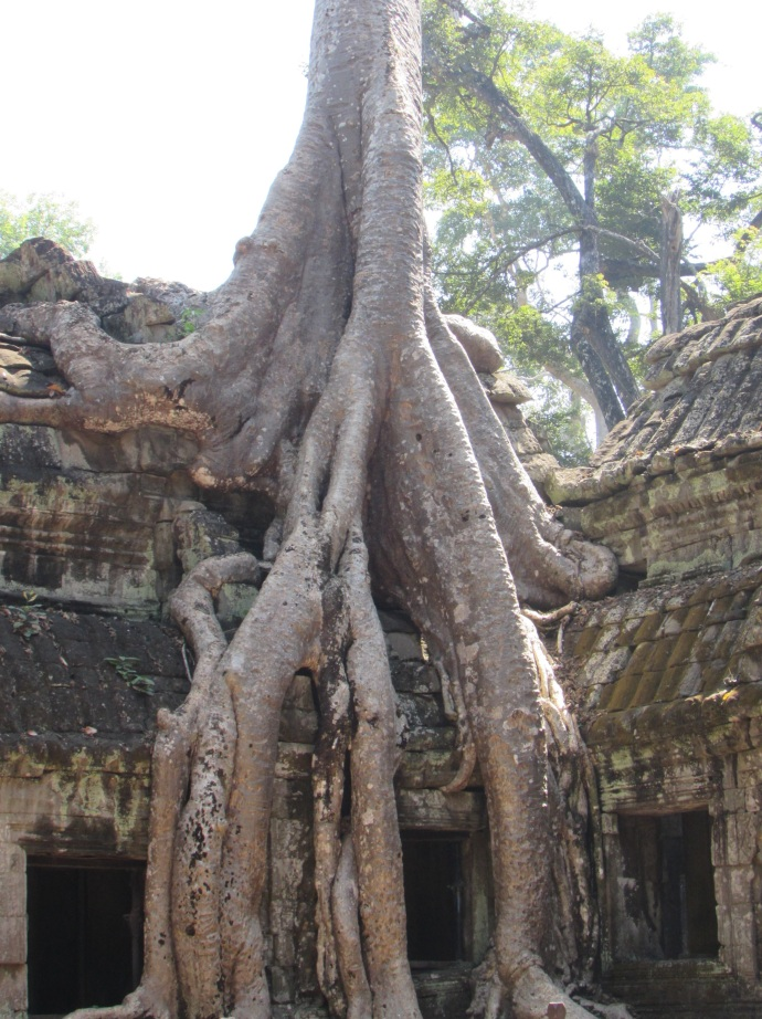 cam-tree-on-temple