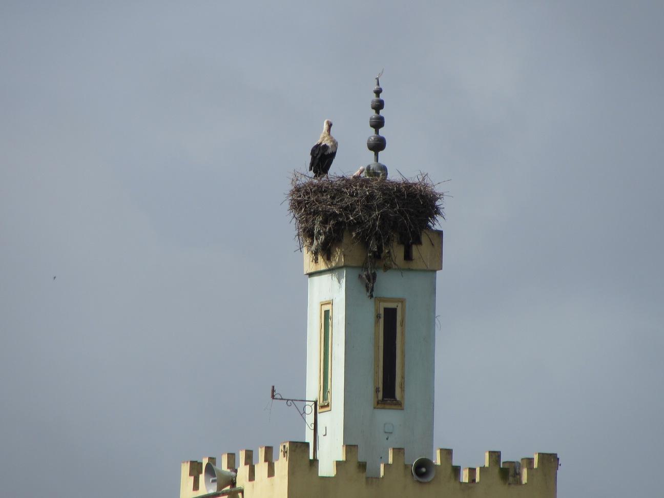 Minaret w Stork 2