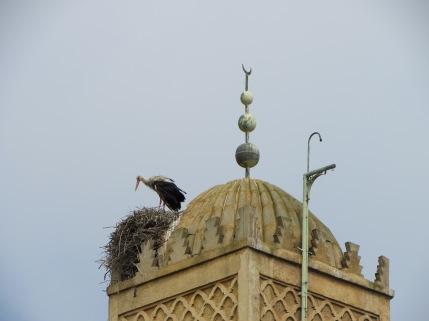 Minaret w Stork 1